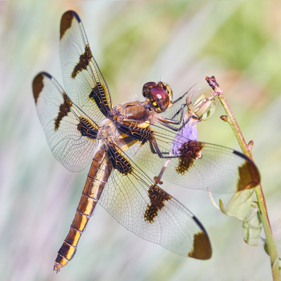 photograph of a dragonfly