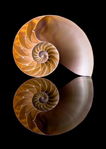 photograph of a Nautilus shell